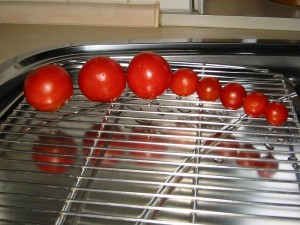 mein 10. Foto - die Tomatenreihe