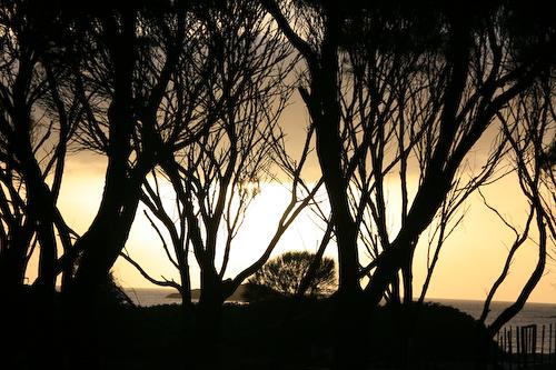 20080406-ausralien-1867