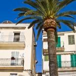 Korsika-20100317_651