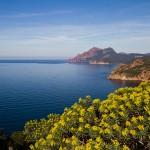 Korsika-20100318_1138